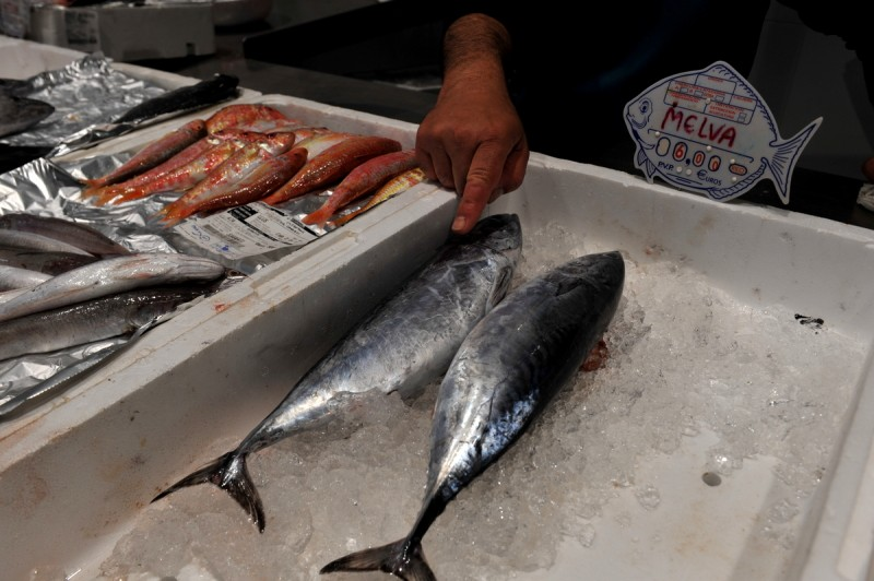 Meaty Melva is an ideal fish for Mediterranean cazuelas and guisos
