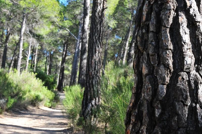 The Ricardo Codorníu walking route in the Sierra Espuña 2.2km